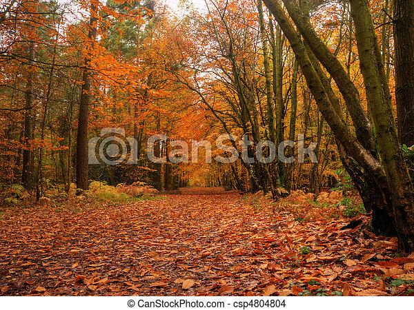Beautiful Autumn Fall forest scene - csp4804804