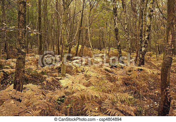 Beautiful Autumn Fall forest scene - csp4804894