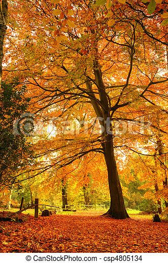 Beautiful Autumn Fall forest scene - csp4805134