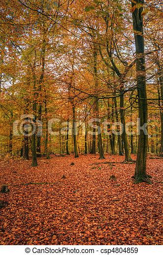 Beautiful Autumn Fall forest scene - csp4804859