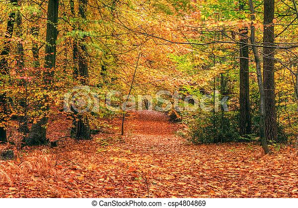 Beautiful Autumn Fall forest scene - csp4804869