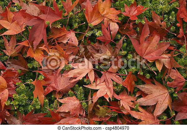Beautiful Autumn Fall forest scene - csp4804970