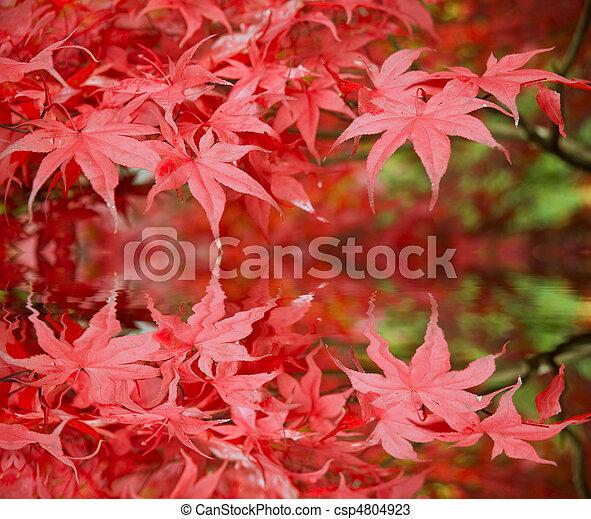 Beautiful Autumn Fall forest scene - csp4804923