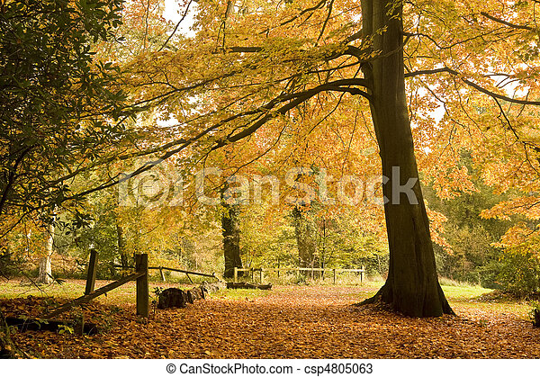 Beautiful Autumn Fall forest scene - csp4805063