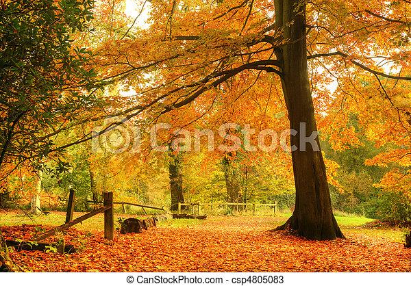 Beautiful Autumn Fall forest scene - csp4805083