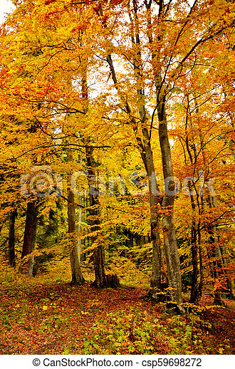 Beautiful autumn fall forest scene with vibrant colors - csp59698272