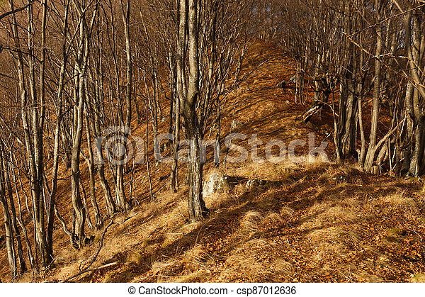 Beautiful autumn fall forest scene with vibrant colors - csp87012636