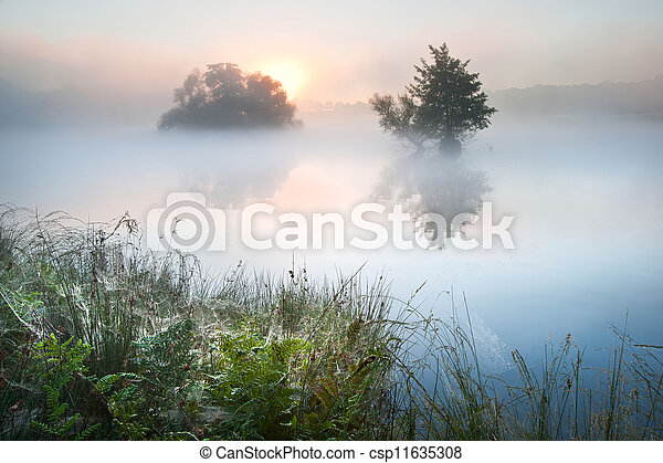 Beautiful Autumn Fall landscape over foggy misty lake wih glowin - csp11635308