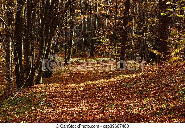 Beautiful autumn forest in evening sunlight, nature background - csp39667480