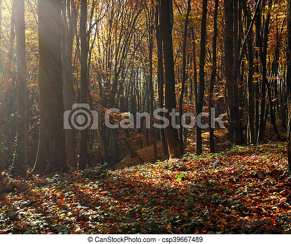 Beautiful autumn forest in rays of evening sun - csp39667489