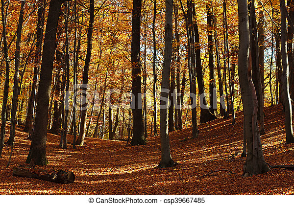 Beautiful autumn forest in the rays of the evening sun - csp39667485