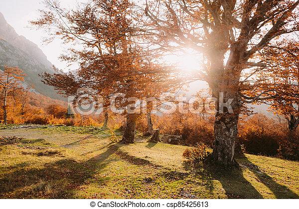 beautiful autumn forest scenery - csp85425613