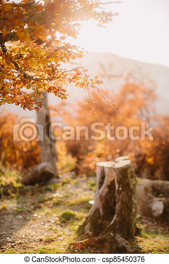 beautiful autumn forest scenery - csp85450376