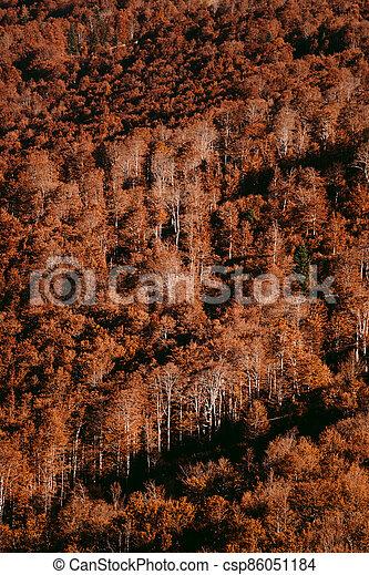 beautiful autumn forest scenery - csp86051184