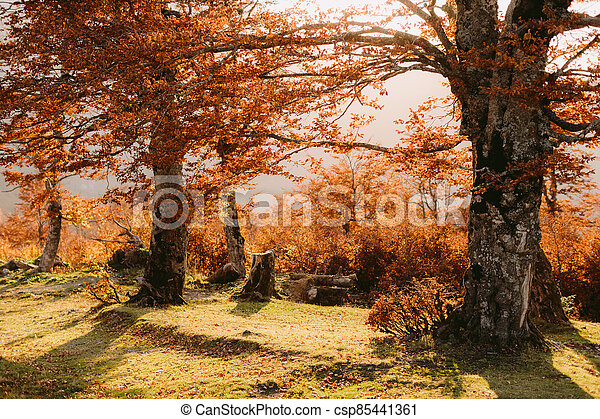 beautiful autumn forest scenery - csp85441361