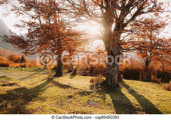 beautiful autumn forest scenery - csp85450393