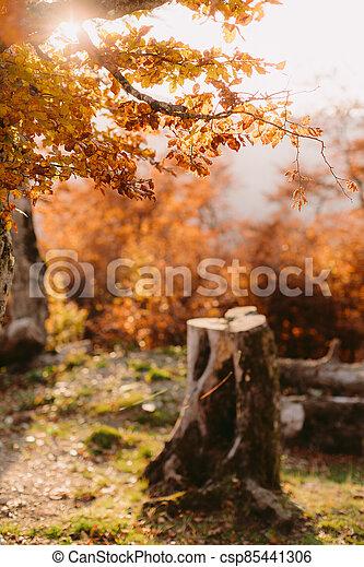 beautiful autumn forest scenery - csp85441306