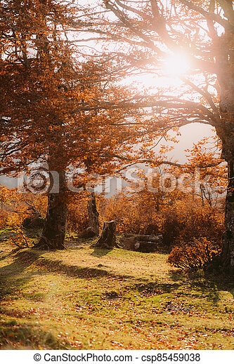 beautiful autumn forest scenery - csp85459038