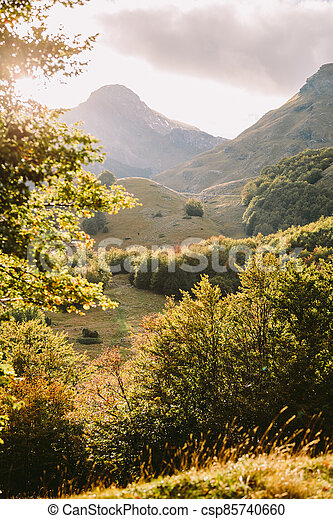 beautiful autumn forest scenery with mountains - csp85740660