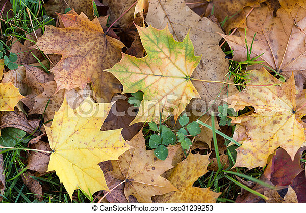Beautiful autumn forest scenery with colorful leaves - csp31239253