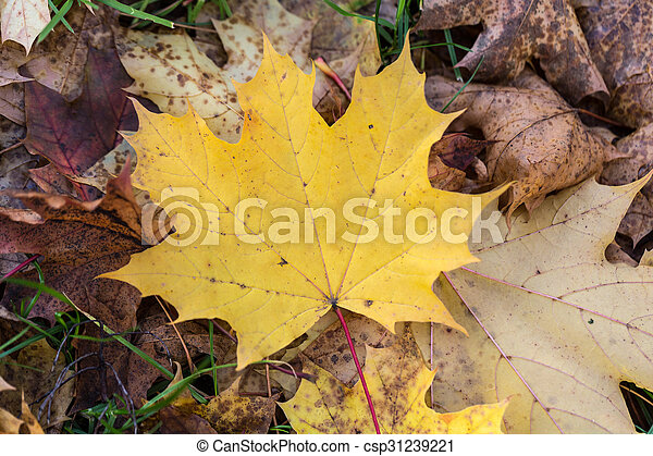 Beautiful autumn forest scenery with colorful leaves - csp31239221