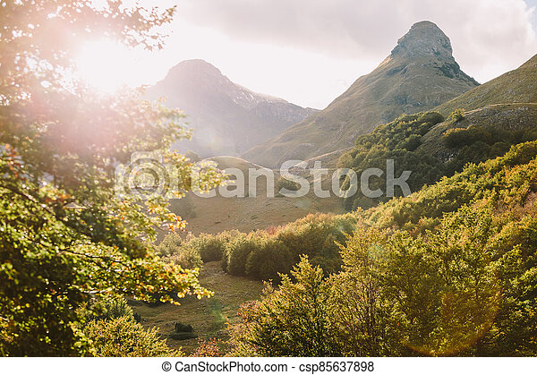 beautiful autumn forest scenery with mountains - csp85637898