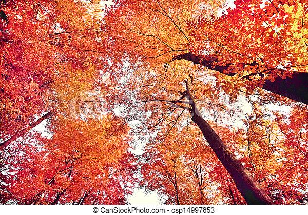 Beautiful autumn forest - csp14997853