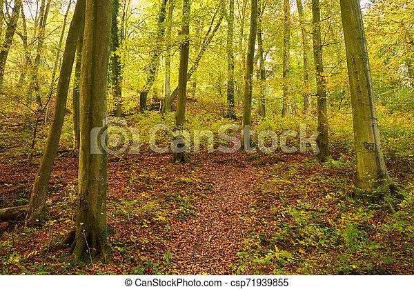 Beautiful autumn forest - csp71939855