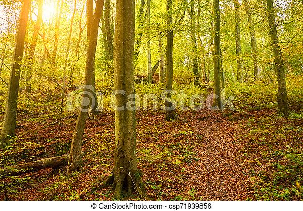 Beautiful autumn forest - csp71939856