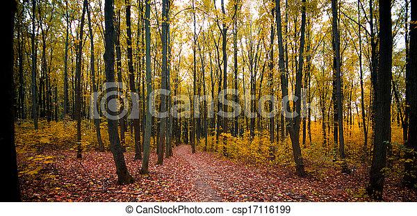 Beautiful Autumn Forest - csp17116199