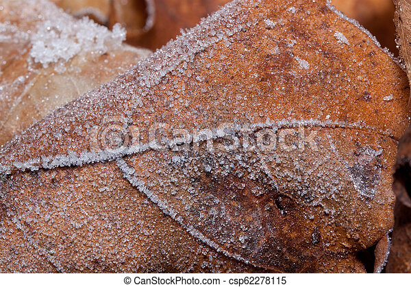 Beautiful autumn leaf covered with hoarfrost. Close up. - csp62278115