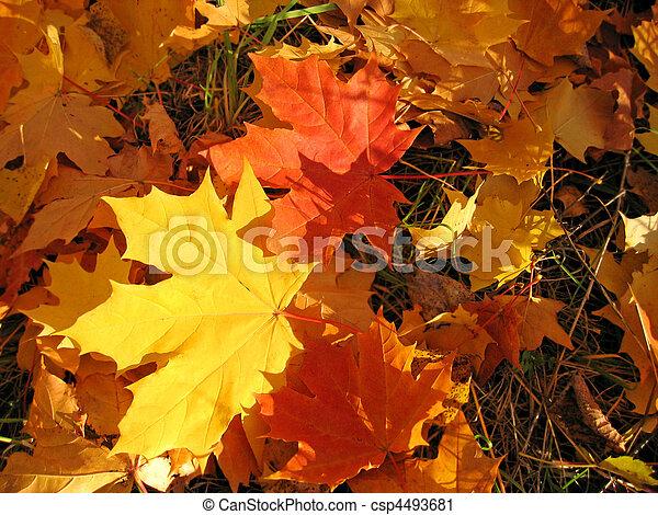 beautiful autumn leaves - csp4493681