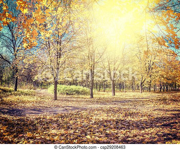 Beautiful autumn parkland - csp29208463