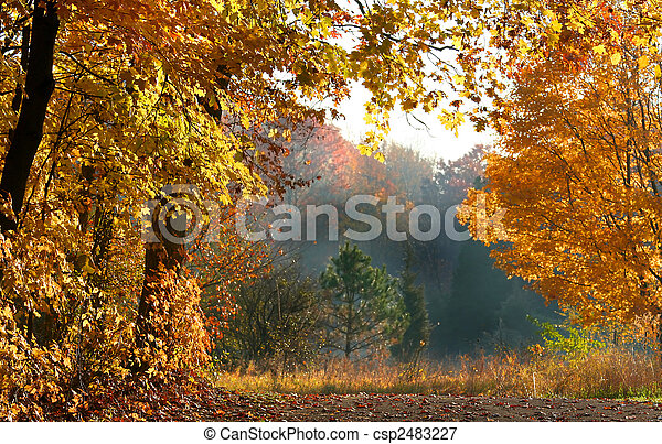 Beautiful Autumn Scene - csp2483227