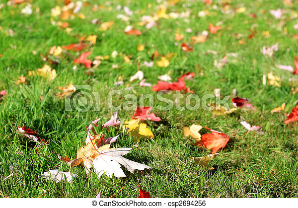Beautiful autumnal leaves - csp2694256