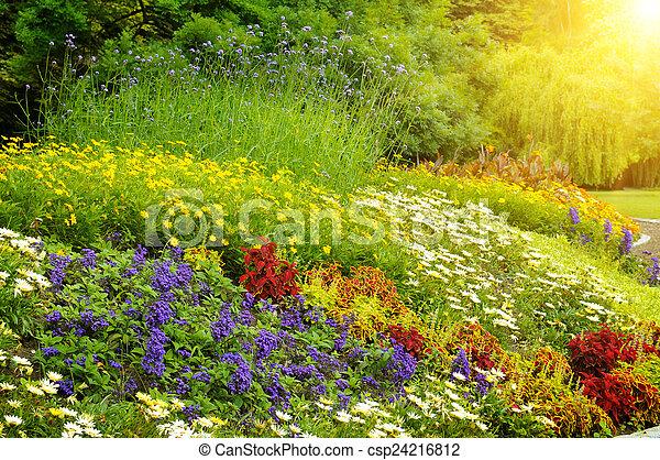 beautiful background of bright garden flowers - csp24216812