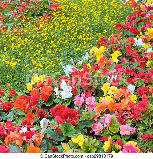beautiful background of bright garden flowers - csp29813179