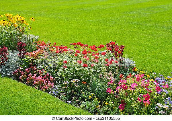beautiful background of bright garden flowers - csp31105555