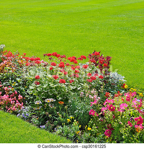beautiful background of bright garden flowers - csp30161225
