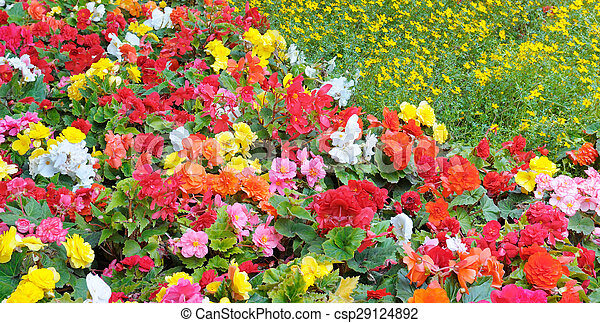 beautiful background of bright garden flowers - csp29124892
