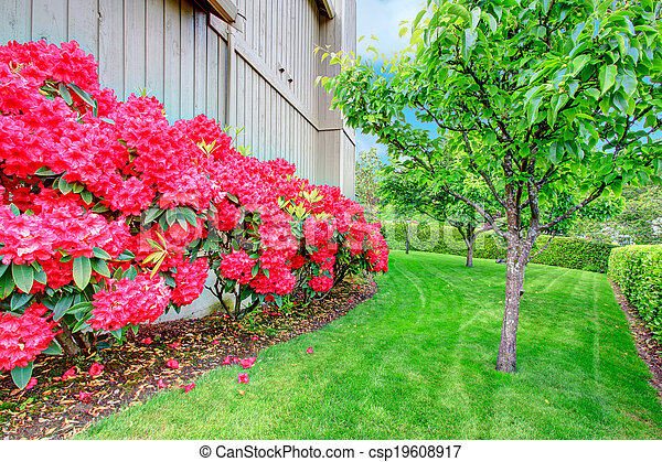 Beautiful backyard garden. Blooming azales - csp19608917