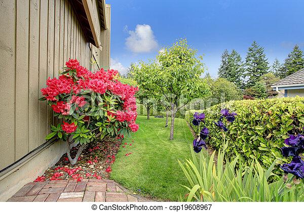 Beautiful backyard garden. Blooming azales - csp19608967
