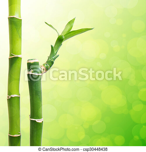 0f5bf81f06e9 Beautiful Bamboo Border - csp30448438
