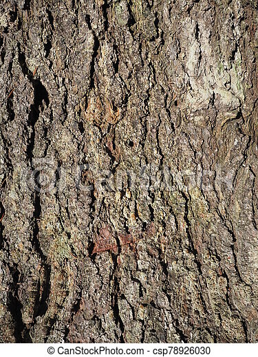 beautiful bark of spruce on a tree. background - csp78926030