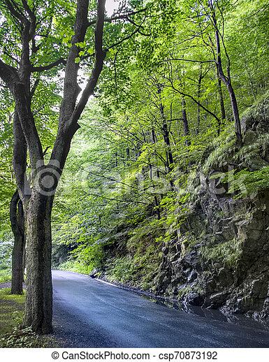 Beautiful beech canopy country road - csp70873192