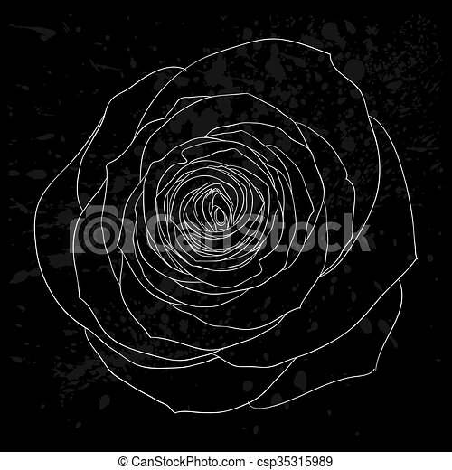 beautiful black and white rose outline with gray spots on a black background. - csp35315989