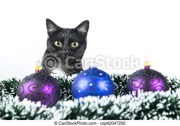 beautiful black cat lies on the christmas ornaments decorations csp42047292