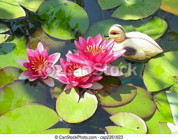 Beautiful blooming red water lily lotus flower with green leaves in beautiful blooming red water lily lotus flower with green leaves in the pond csp2261623 mightylinksfo
