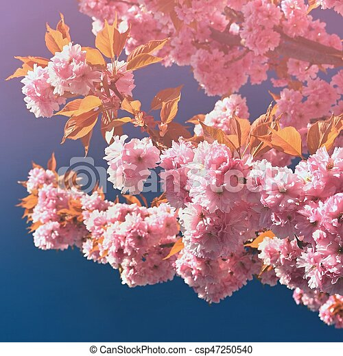 Beautiful Blossom Tree Nature Scene With Sun On Sunny Day Spring Flowers Abstract Blurred Background In Springtime
