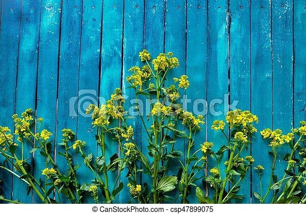 Beautiful blue background with yellow wildflowers - csp47899075